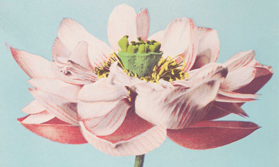 Buddha's flower